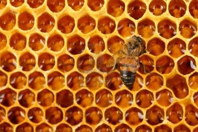 Lo stress da pesticidi provoca il collasso delle colonie di api - Nido api finestra ...