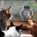 """Opuscolo """"Gatti e uccelli"""". La guida per una serena convivenza"""