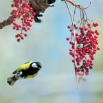Gli uccelli cercano cibo la mattina e lo mangiano la sera