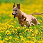 Fiori di Bach: un rimedio naturale anche per gli animali