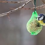 Birdgardening. Un opuscolo Lipu spiega come iniziare