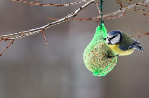 birdgardening