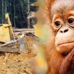 ACTION! Firma per gli animali del Parco Tanjung Puting