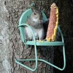 Squirrelgardening!
