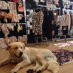 Al lavoro con il cane nella maison di Elisabetta Franchi