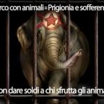 Circo con animali, spiega a tutti cos'è. I materiali