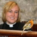 Un pettirosso nel coro della chiesa