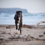 Richiamare il cane: piccole istruzioni per l'uso