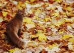 autunno gatto
