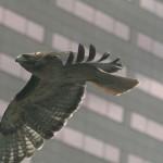 Le architetture che salvano gli uccelli dagli impatti