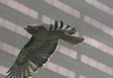 uccelli vetrate