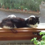 Lunga vita a Lilia, la gatta fiorentina di 26 anni