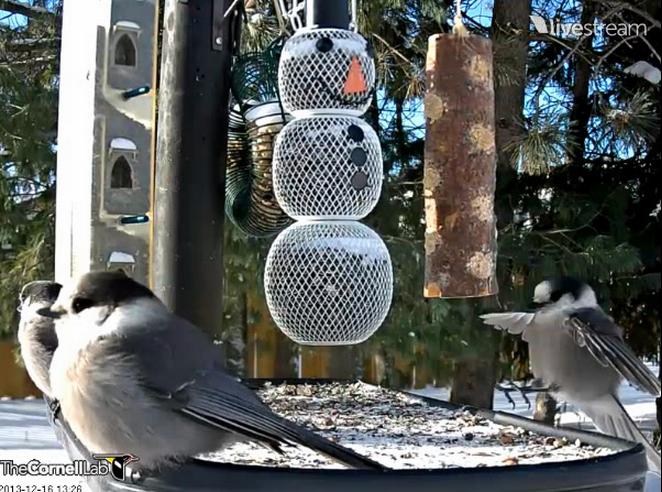 Super Birdgardening. La pigna mangiatoia [Video] | YouAnimal.it VZ93