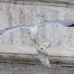 ACTION. Basta con il lancio delle colombe. Scrivi al Papa