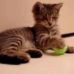 Oskar, il gattino cieco più famoso del web [Video]