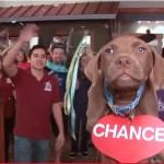 Un video strepitoso per promuovere le adozioni