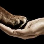 Italiani contrari a vivisezione, pellicce e caccia (Eurispes)