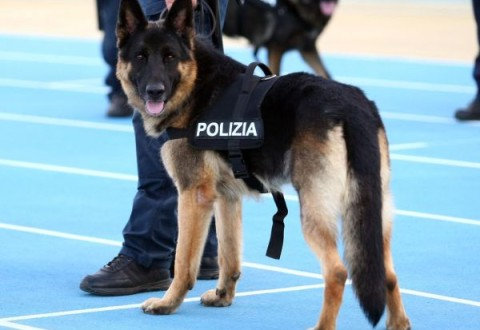 Adotta Un Cane Poliziotto In Pensione Youanimalit