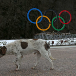 ACTION! Firma e diffondi per i randagi di Sochi