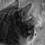 "Scott: ""I gatti sono esseri misteriosi…"" #aforisma"