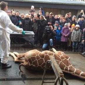 Marius dopo l'esecuzione  (Foto via ibtimes.co.in, http://goo.gl/iz5NJa)