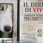 ACTION! Petizione contro i canili lager