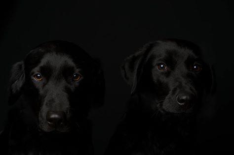 Black! (Photo by Vaughn Dohmeier)