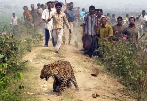 leopardo petizione