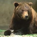 Istituzioni alleate per l'orso marsicano
