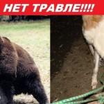 ACTION! No ai combattimenti tra orsi e cani in Russia