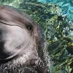 No ai cetacei-clown. Una firma contro i delfinari
