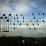 uccelli musica jarbas