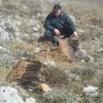 """Due grifoni morti in Abruzzo. Lipu: """"Colpa delle pale eoliche"""""""