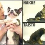 Il biscotto sparisce: le reazioni dei cani [Video]