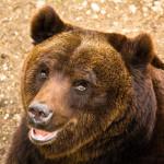 Wwf, Governo e Regioni tutelino l'orso marsicano