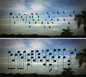 uccelli note jarbas