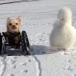 Roo e Penny, storia di un'amicizia senza frontiere