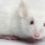Ue, no ai cosmetici testati sugli  animali