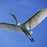 La Fiera del birdwatching di Comacchio dal 1° al 4 maggio