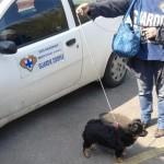 Lav-Enpa: «Marino faccia rispettare il Regolamento»