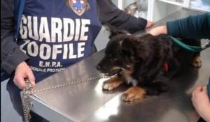 Il cagnolino alla visita veterinaria dopo il sequestro