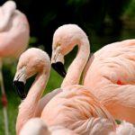 Torna la Fiera del birdwatching di Comacchio