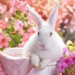 L'origine del coniglietto pasquale