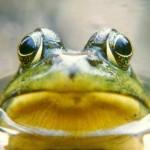 290 specie di anfibi in Madagascar, 100 da studiare