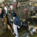 ACTION! Petizione all'Ue per la tutela degli animali in Cina