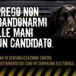"""Partita la caccia al voto """"animalista"""" degli aspiranti sindaci di Roma"""