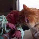 Quando il gatto incontra il neonato [Video]