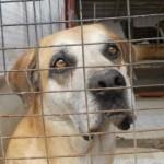 Avcpp: a Roma gli animali muoiono nell'indifferenza