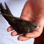 Uccellino a terra: cosa fare
