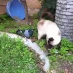 Strani giochi tra peli e piume [Video]